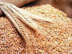 مصر تشتري 360 ألف طن من القمح