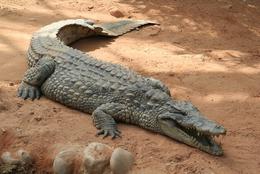 10 أسرار في رؤيا التمساح