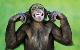 """{للمهاريش فقط}.. """"قالوا لي هايسخطوك ياقرد !!"""""""