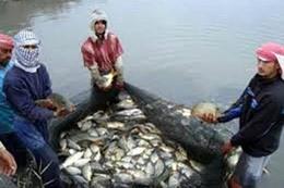 الأسماك السامة تغزو الأسواق