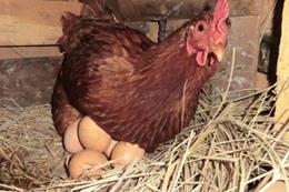 رأيت أنى أجمع البيض