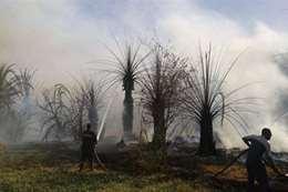 حريق بمزرعة نخيل بجوار استراحة محافظ الوادي الجديد