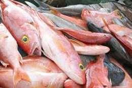 أسماك حية للتصدير