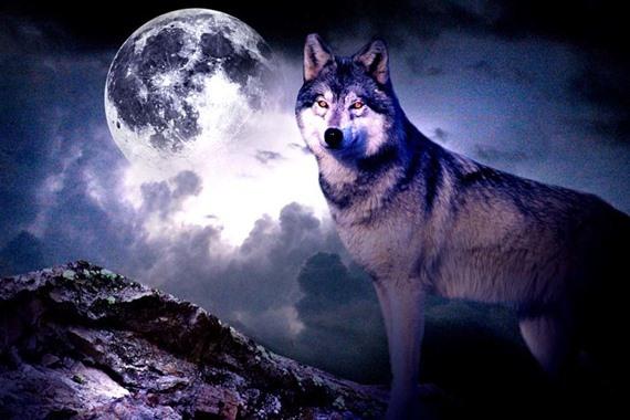 رؤيا الذئب