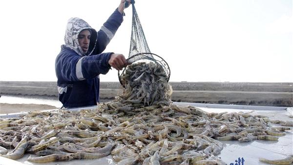 الانتهاء من حفر 600 حوض للاستزراع السمكي منذ 2015