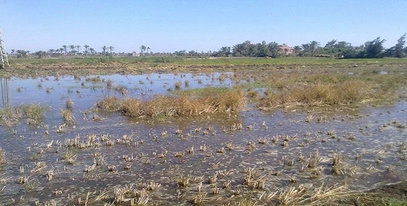 أهالي البرلس يهددون بالتظاهر بسبب نقص مياه الري