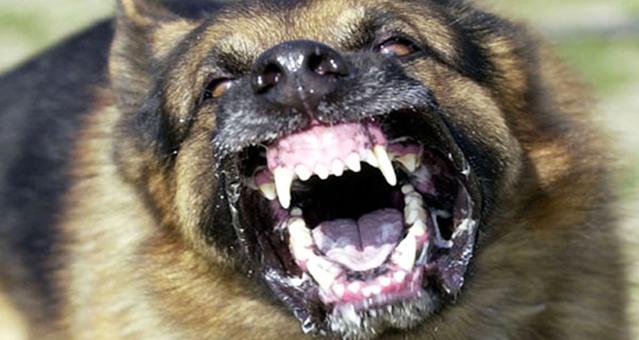 كلب مسعور يعبث بتمنارت ويوقع 8 ضحايا