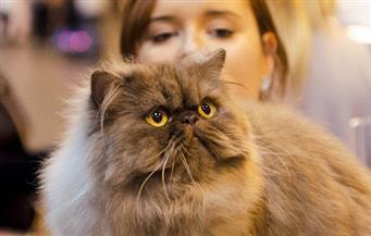 قطة تمنع صاحبتها من دخول نيوزيلندا